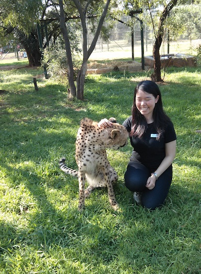 Oliver the purring cheetah
