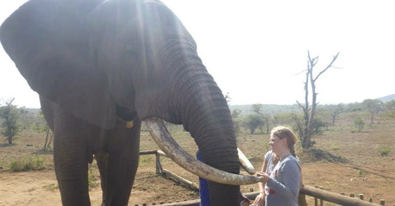 Victoria Hymel '16 researched animal behavior in South Africa
