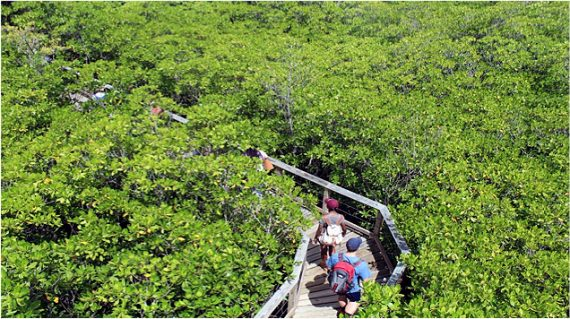 Students tour mangrove forests in Puerto Rico.