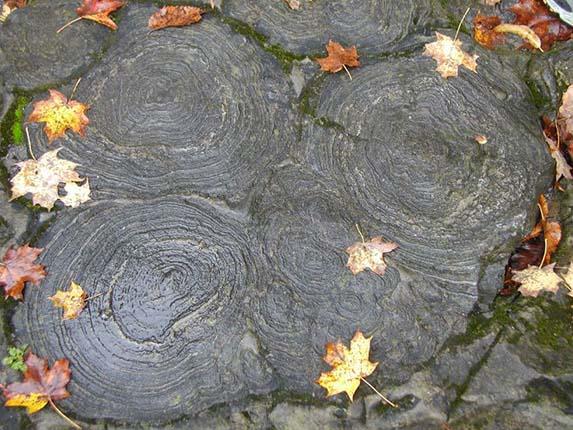Stromatolite heads, Saratoga NY