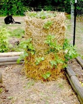 Gardening Sustainably: Potato Towers