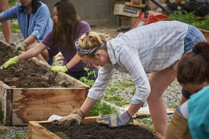 Student and community volunteers help build a new raised bed at the Colgate Community Garden.